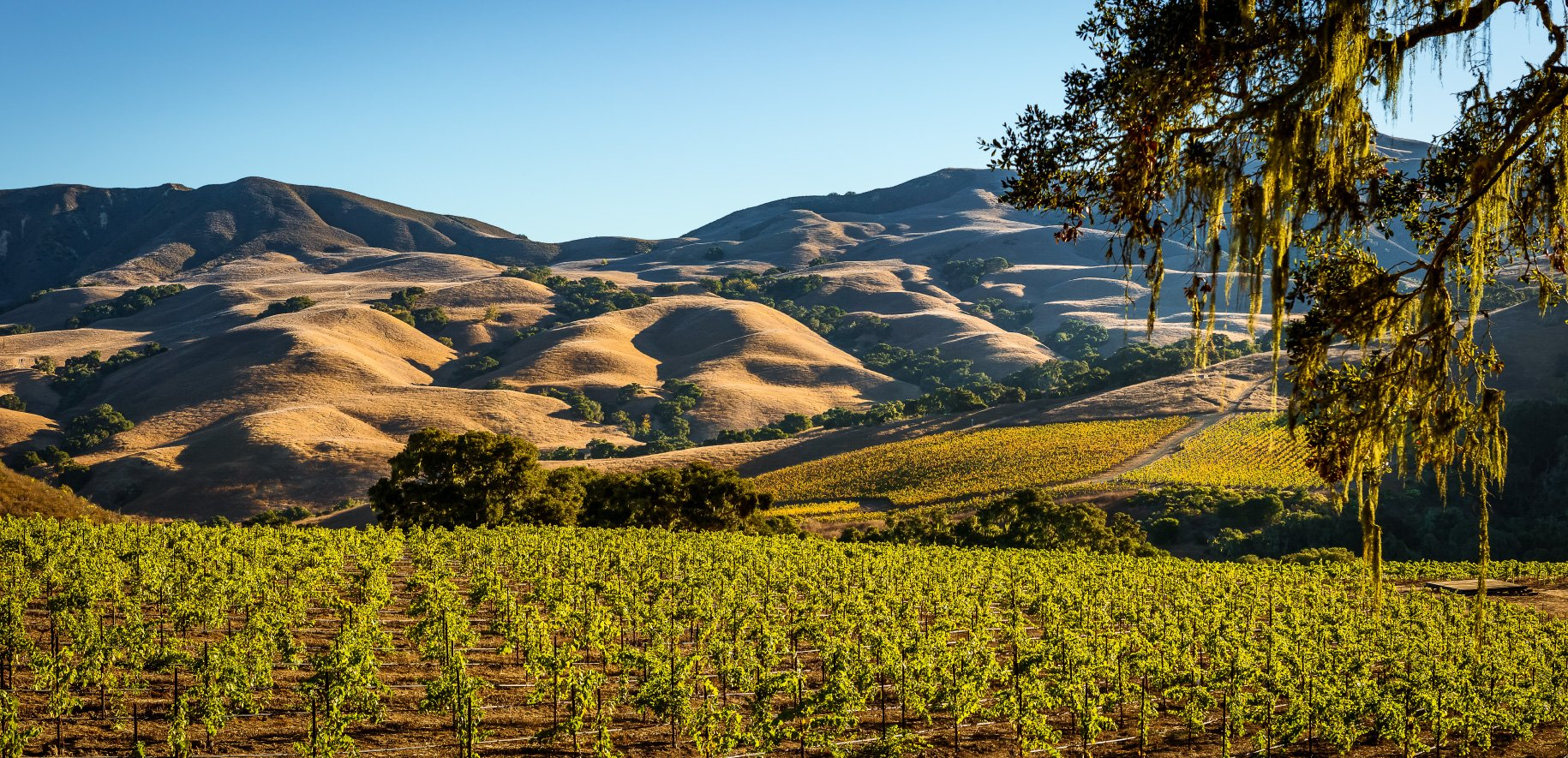 Rolling hills and vineyards