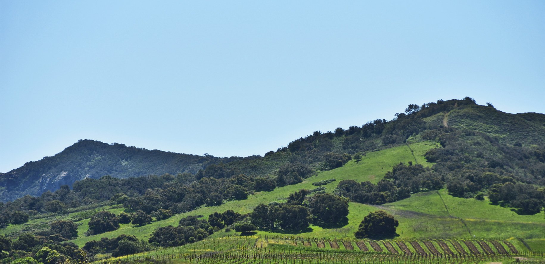 Vineyard and hill